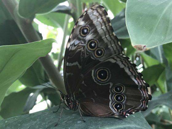 Schmetterlinge auf der Insel Mainau - Schmetterlingshaus