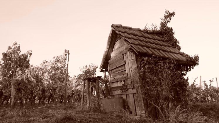 Kleiner Wanderrundweg durch Weinberge in Weingarten